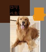 6歳以上のワンちゃんにおすすめ犬康食ワンPremium