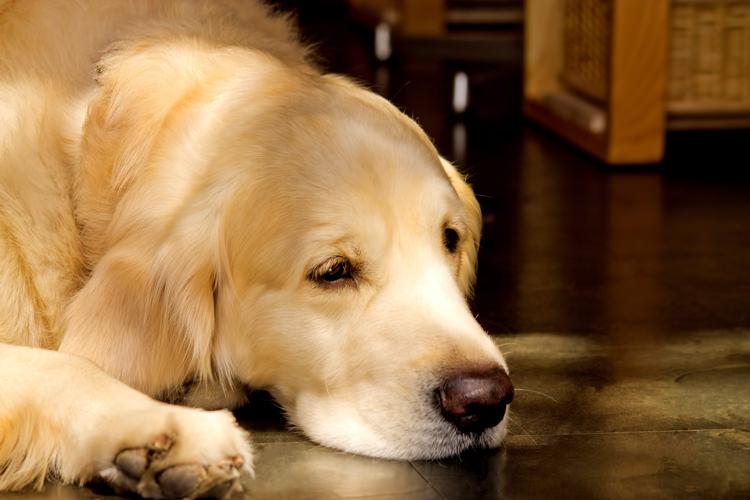 犬用サプリ:選び方(気をつける点)