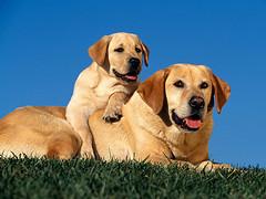 犬用サプリ:使用方法や与え方
