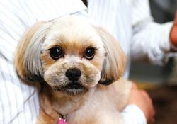 ミックス犬(コロンちゃん)