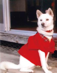 紀州犬(コロちゃん)の体験談