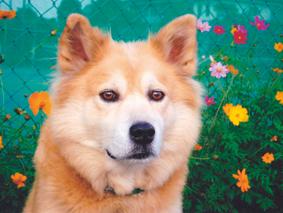 ミックス犬(ミロくん)の体験談