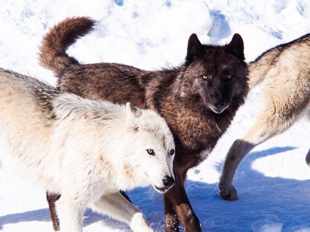 犬の寒さ対策は何をすればいいの?エアコンや段ボールの上手な使い方