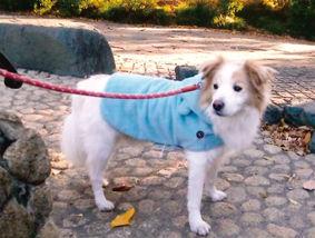 ミックス犬(マルくん)