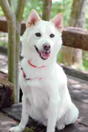 ミックス犬(ももちゃん)の体験談