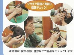 子犬の健康管理