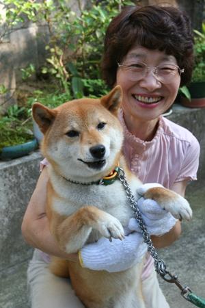柴犬(京奈ちゃん)の体験談