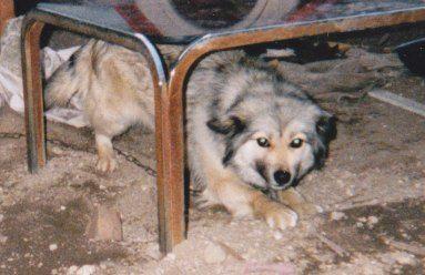 ミックス犬(ミミちゃん)の体験談