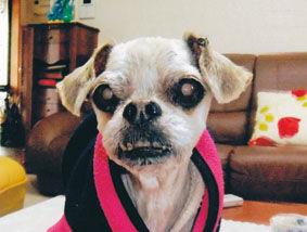 ミックス犬(チャンプくん)の体験談
