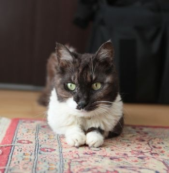 メイちゃん・リンちゃん・猫のモモちゃんの体験談