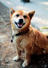 ミックス犬(チロくん)の体験談