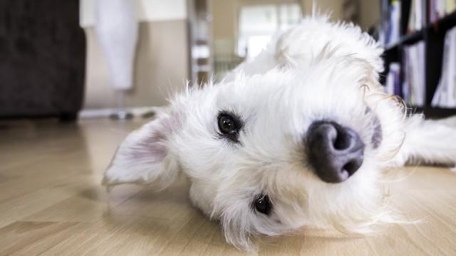 愛犬に夏の留守番をさせるときの対策は?エアコンの使い方や暑さ対策を解説