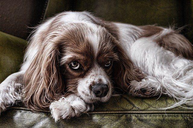 dog-2785066_640