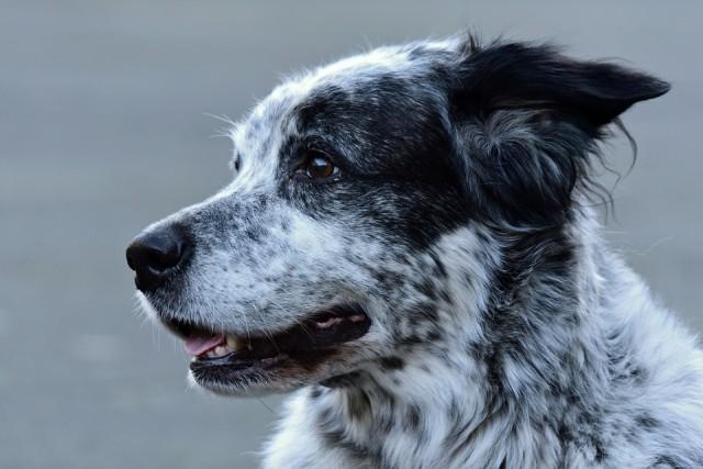 dog-4025991_960_720