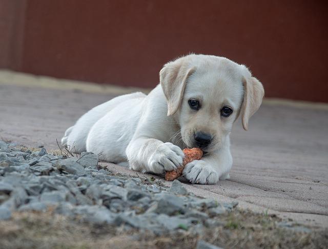 dog-4203732_640