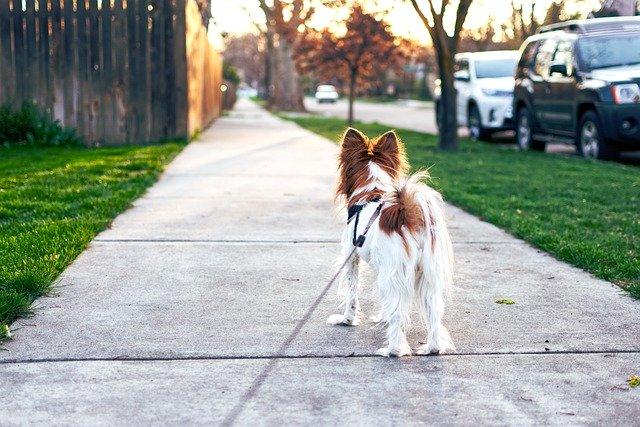 冬の散歩は愛犬にダメージを与えすぎる?外へ出る前に必要な対策とは