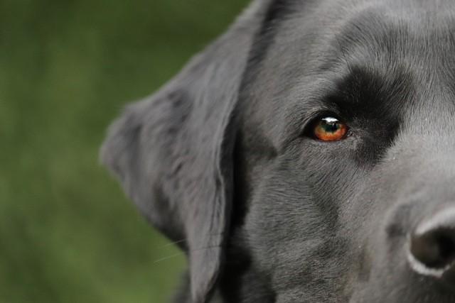 dog-4765784_960_720