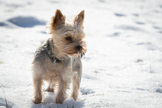 寒がる愛犬を見逃さないで!犬が寒い時のサインと有効な寒さ対策