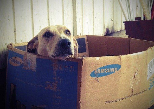 dog-660505_640