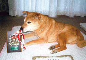 ミックス犬(コロくん)