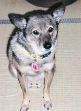 ミックス犬(りぼんちゃん)の体験談