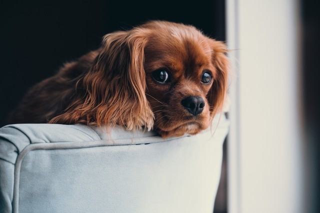 puppy-2592307_960_720